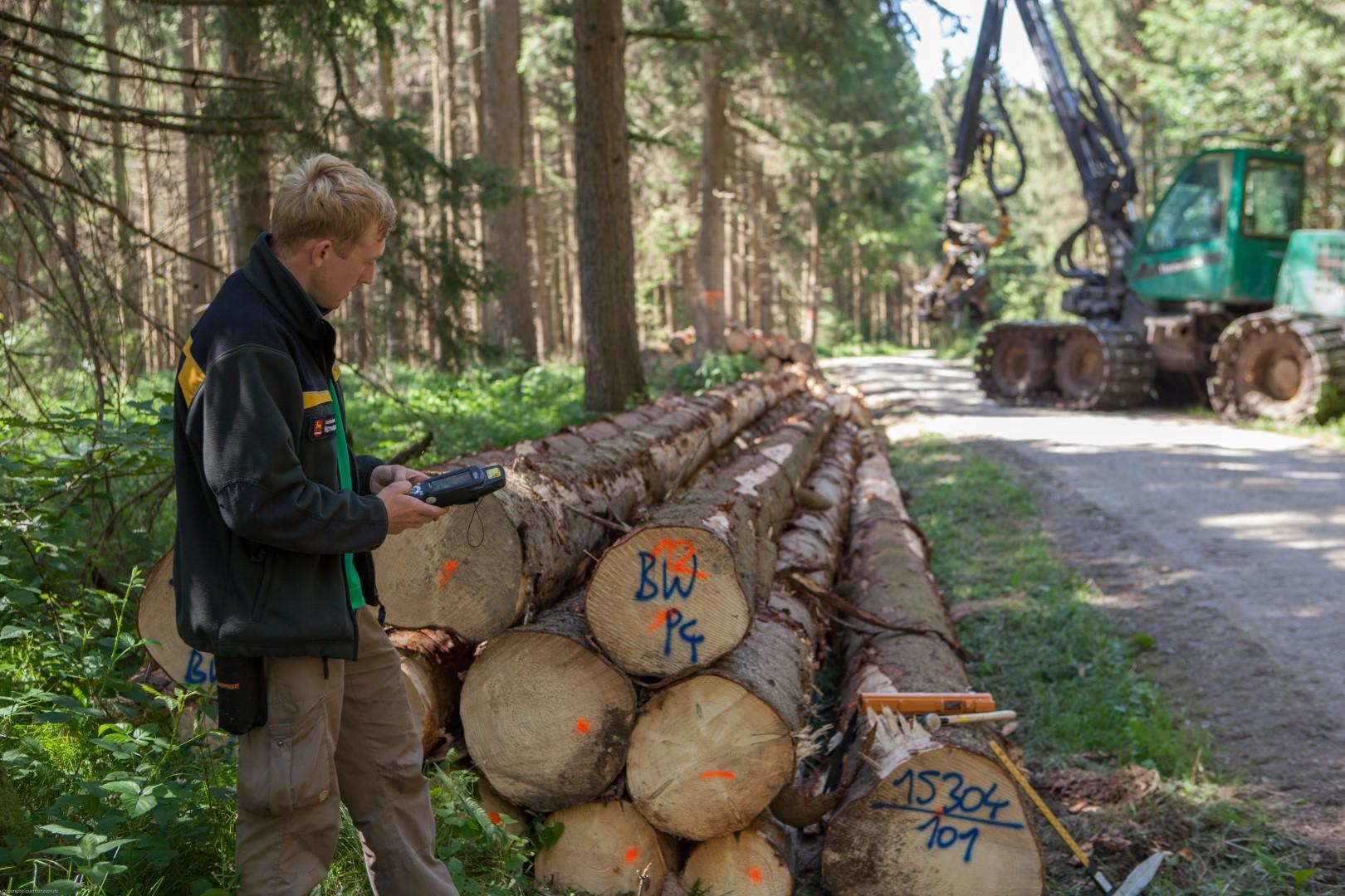 Holzaufnahme